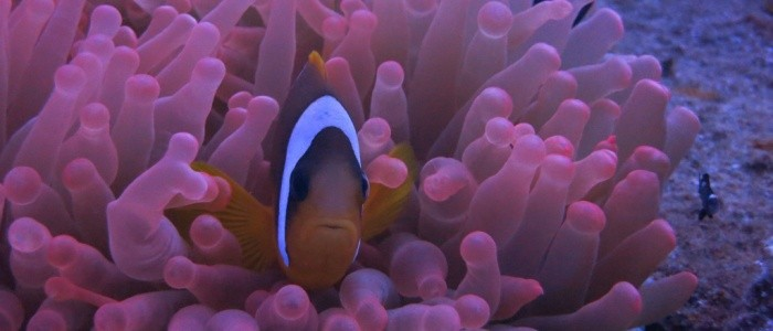 Featured image for Red Sea Adventures - November 2015